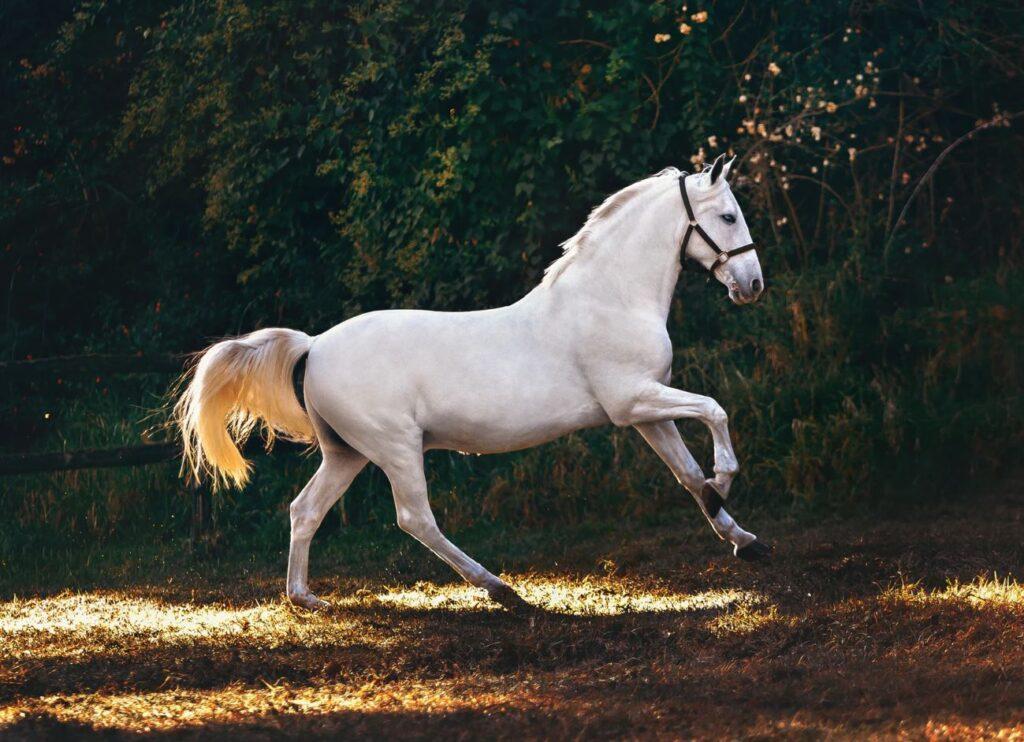 Checklista vid köp av häst