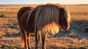 Klippa häst gör så här