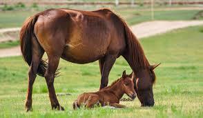 klippa häst på våren