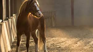 Ska du sälja din häst