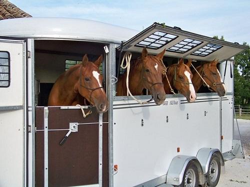 Transportera min häst