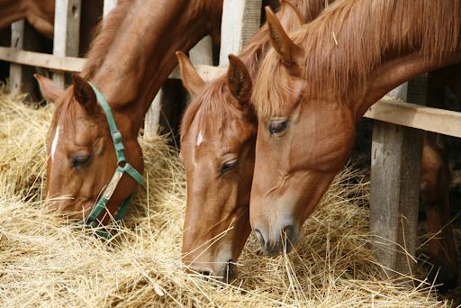 Utfodra hästen rätt
