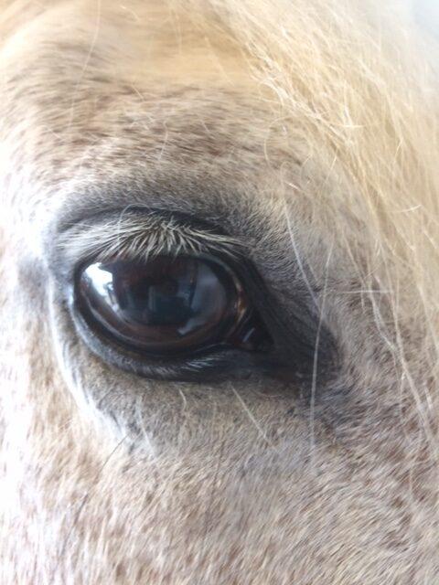 Lilly har vita ögonfransar