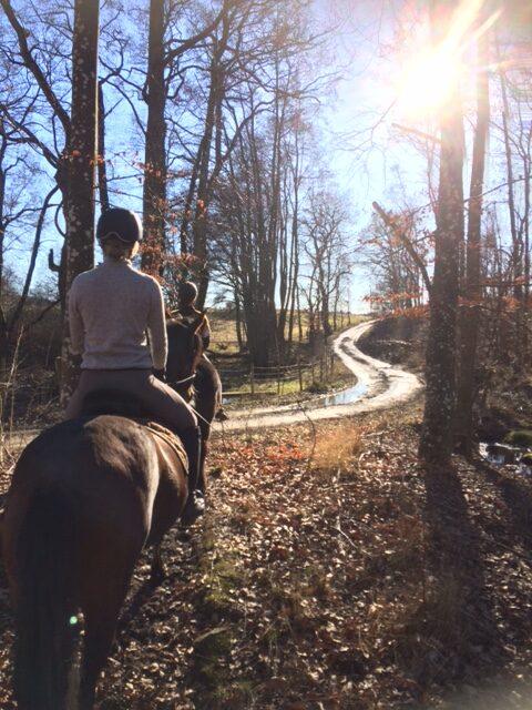 Hästar, slingrande grusväg och solen i blick