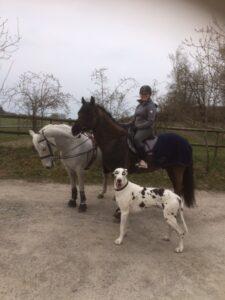 hästar och hund