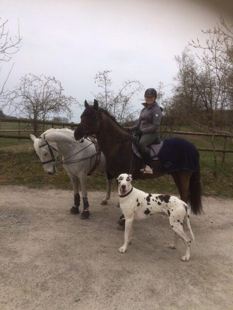 Hästar och Grand Danois